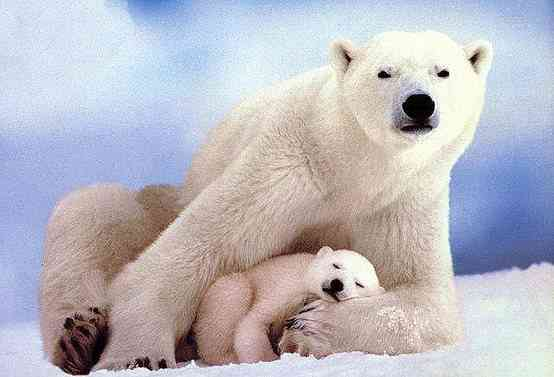 可愛い動物の画像を貼るトピ