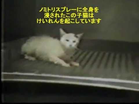 猫やうさぎを動物実験に使う。化粧品 日用品 - YouTube