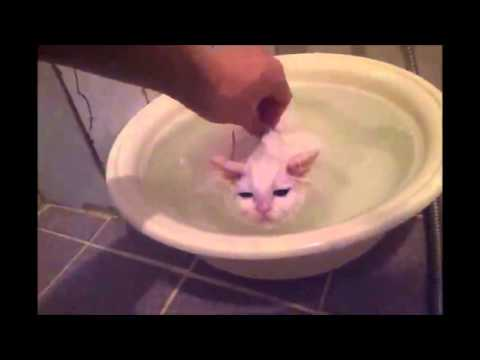 Kitten Refuses to Leave Warm Bath! - YouTube