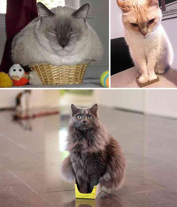 If It Fits, I Sits: These 21 Cats Prove That No Space Is Too Tight | Bored Panda