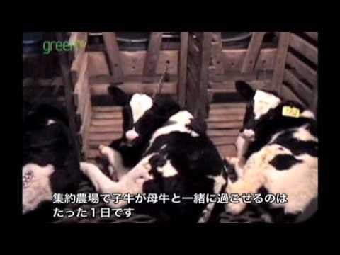 見過ごされてきた家畜たち〜知られざる命 - YouTube