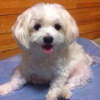 うちの犬に人間用の「進研ゼミ」が届いた!と話題に - NAVER まとめ