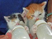 【 超カワイイ 】動物の赤ちゃん   Facebook