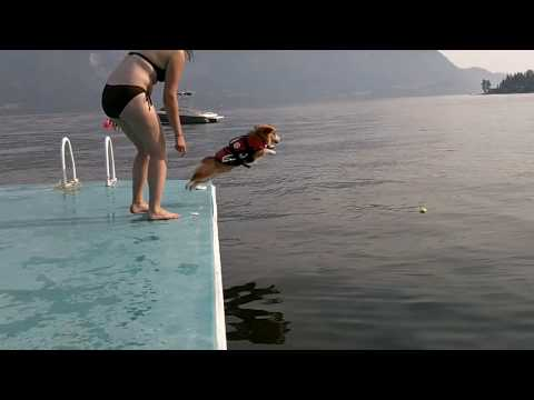 Corgi Flop - YouTube