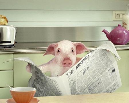 お宅はどこの新聞を取ってますか?