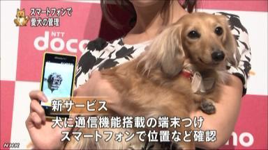 スマホで愛犬の情報を確認へ NHKニュース