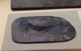 この魚の化石めっちゃアカンやつだwwwwwwwwwwwwwww : はちま起稿