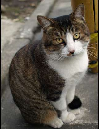 猫の世話で自動餌やり機に頼りすぎてしまった結果www