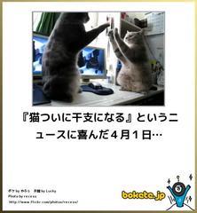 可愛い猫の画像を貼る癒されるトピ