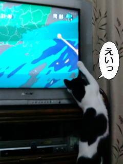 NHK BSプレミアム「岩合光昭の世界ネコ歩き」の人気っぷりを決定的に裏付ける画像集