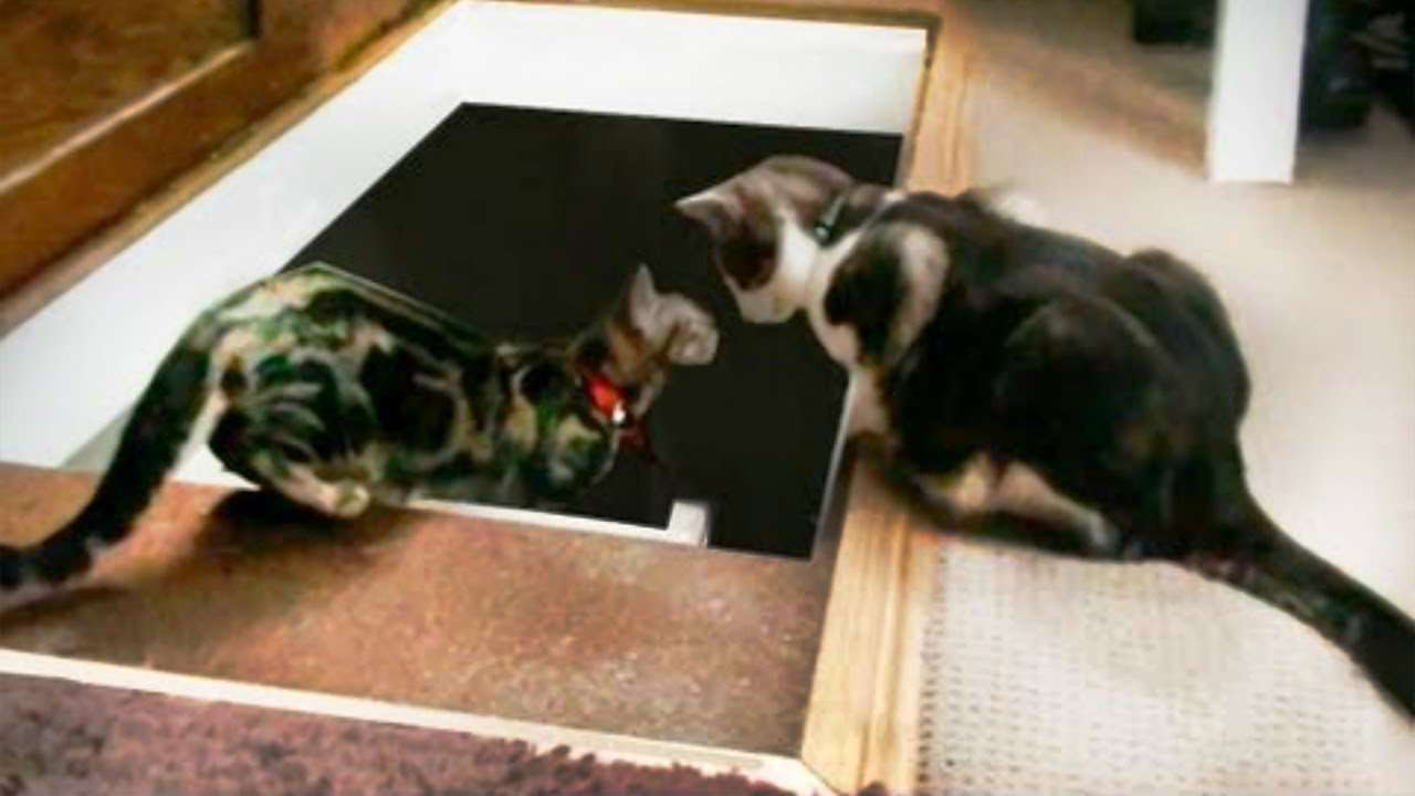 Kitten Gets Thrown Down a Loft Ladder (Cat Pushes Another Cat down the Stairs) ORIGINAL - YouTube