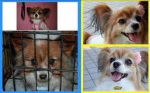 杉本彩、犬の大量死・遺棄事件に関して言及「共にこの問題に立ち向かいましょう!」