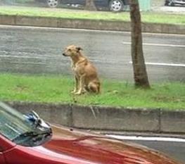 道端に捨てられた犬、2年間雨の日も風の日も主人の迎えを待ち続ける
