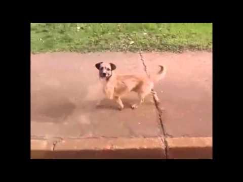 Cachorro persegue ambulância em Taguatinga - YouTube