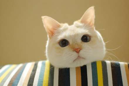 【画像】ホットカーペットがあったかいことに気付いた顔が可愛いw
