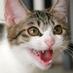 """V and Ume on Twitter: """"相棒がホットカーペットで爆睡しちゃって、キラキラボールで遊ぼうと思ったけど、誰も投げてくれなくて、動け!動け!と念じている白猫 http://t.co/3ubLoYkBSg"""""""