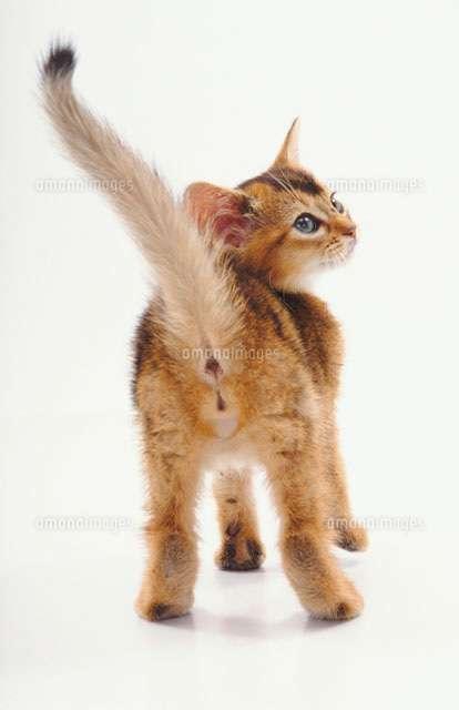 猫のお尻「ネコケツ」が可愛すぎる!