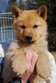 日本犬、大好きな人〜