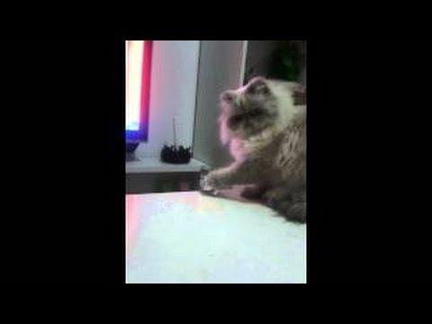 Вредный кот :) | Gato malo - YouTube