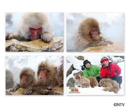 「旅猿」好きな人!