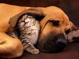 犬と猫飼ってる人