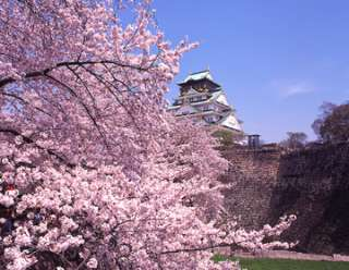 あなたの街の「桜の名所」、、、