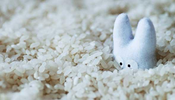 お米のカロリーを劇的に減らす炊き方が発見される!