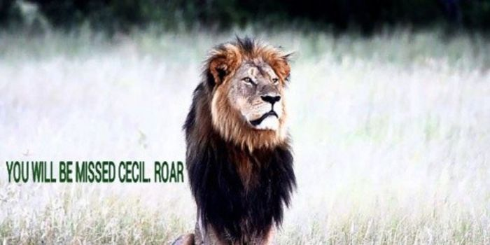petition: DEMAND JUSTICE FOR CECIL THE LION IN ZIMBABWE