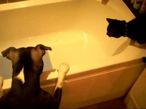 Dog baths cat (Original) - YouTube