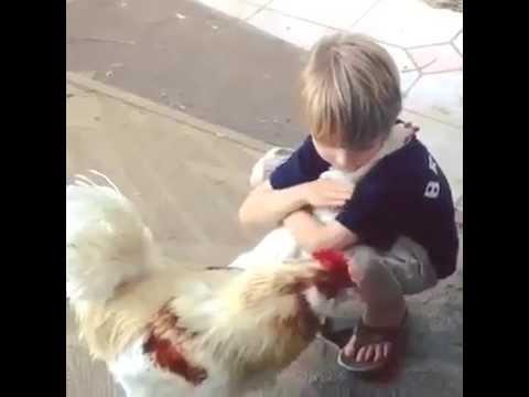 Boy Hugging Chicken - YouTube