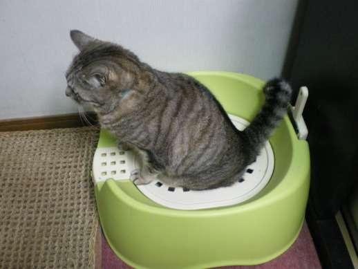 新潟県の条例「猫は不妊・去勢手術して屋内飼い」→愛猫家「虐待だ!」