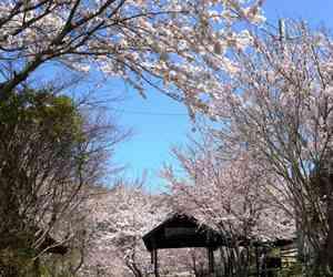 白水温泉 竹の倉山荘【公式サイト】 阿蘇 南阿蘇 全室露天風呂付き