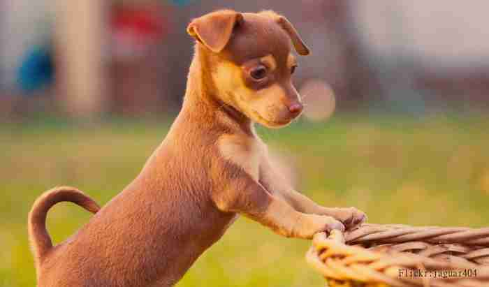 名づけ方を日米で比較!アメリカで最も多い犬の名前は?   イヌモネコモ