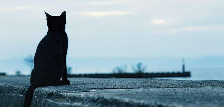 幸運を招く黒猫