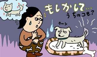 犬、猫の鬱病について。