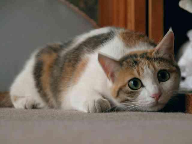 猫ブームついて物申す!
