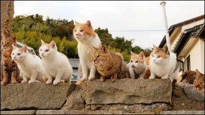 島民15人とネコが100匹以上暮らす島「青島」で大量のネコと戯れてきました - GIGAZINE