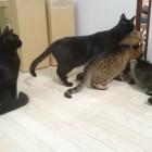 黒猫祭り!!!    ANIMALive