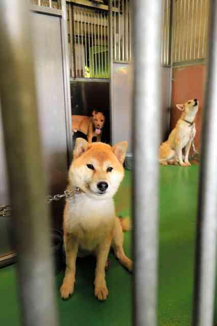 熊本)犬殺処分ゼロ、途切れる 熊本市、1年7カ月ぶり:朝日新聞デジタル