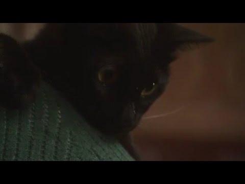 猫が恩返し/世にも奇妙な物語 - YouTube