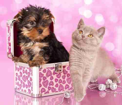 オス犬はカタカナ表記が独占! 犬猫の名前ランキング - Peachy - ライブドアニュース