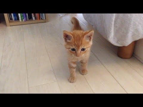 茶トラ子猫拾った翌朝 ベッドの下から恐る恐る可愛い↑↑ / Sleepy cat Hiroshi:  Grumpy morning - YouTube