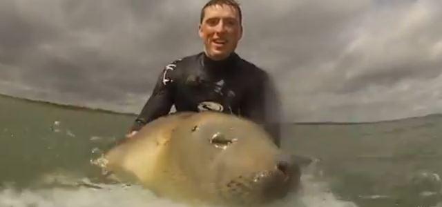 サーフィン中にアザラシの赤ちゃんが乱入 → 人間と野生のアザラシが一緒にサーフィンする様子をボードに付けたカメラが記録していた