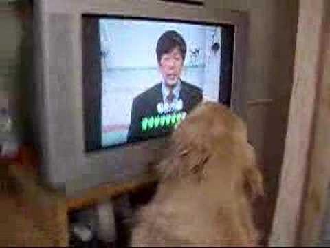 ジャパネット大好き犬