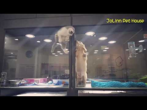 Cute Kitten Escapes Cage to Play With Puppy - YouTube