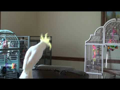Snowball's Tribute to Michael Jackson - YouTube