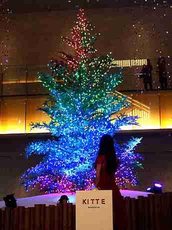 KITTE名古屋にクリスマスツリー 高さ7メートル、本物のモミの木使い /愛知 (みんなの経済新聞ネットワーク) - Yahoo!ニュース