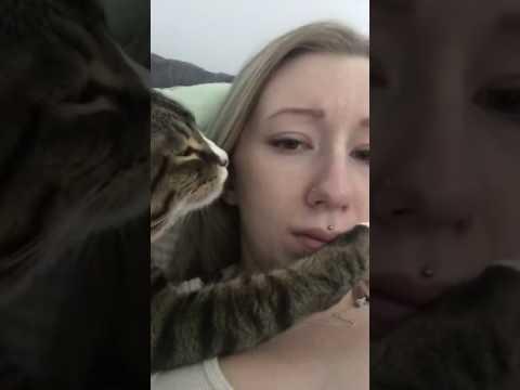 Pervert Cat - YouTube