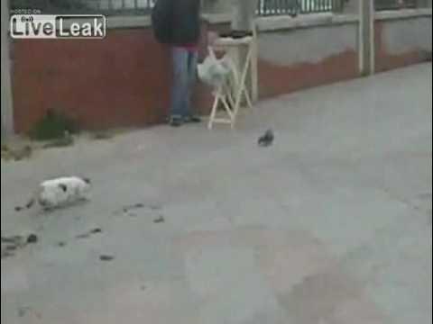 狙っていた獲物を逃したネコが、極端にガッカリするムービー - YouTube