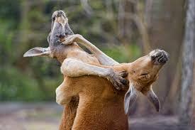 喧嘩してる動物画像